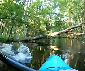 【動画】カヤックを漕いでいる男性にワニが突っ込みカヤックが転覆してしまう