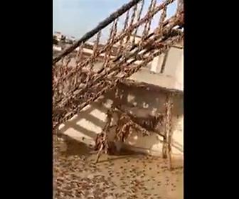 【衝撃】街をイナゴの大群が埋め尽くす衝撃映像