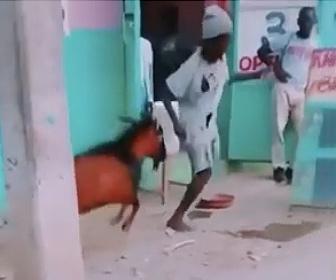 【衝撃】片足の男性 VS ヤギ