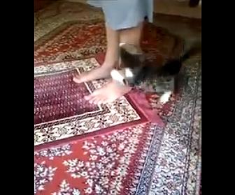 【動物】お祈りをする男性に子猫がしつこく飛びかかる衝撃映像