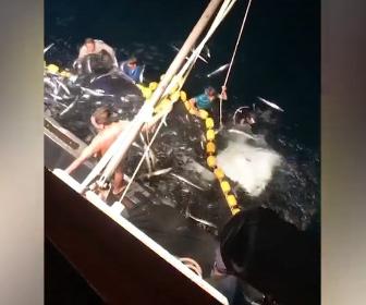 【衝撃】漁の網に入ってしまった30枚のマンタを漁師たちが助け出す衝撃映像