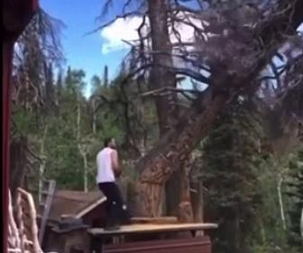 【衝撃】大木をチェーンソーで切り倒した男性に悲劇が…
