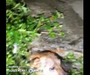 【衝撃】母犬が水没した穴から子犬を必死に救出する衝撃映像