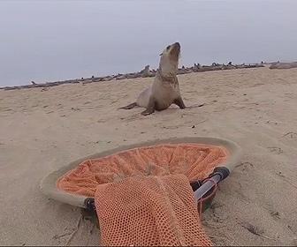 【衝撃】釣り糸に絡まったアシカを捕まえ助けてあげる衝撃映像
