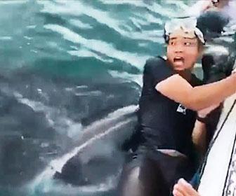 【衝撃】シュノーケルをしていた男性がジンベイザメに飲み込まれそうになる衝撃映像