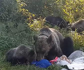 【動物】クマの親子が駐車場で車から食べ物を奪い食べてしまう衝撃映像