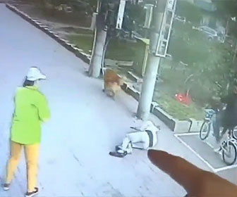 【衝撃】バルコニーから落下したネコが犬の散歩をする男性の頭に直撃してしまう衝撃映像