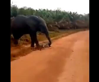 【動物】自転車に乗っていた男性がゾウに襲われ、ゾウの隙を見て必死に逃げる衝撃映像