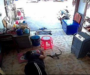 【衝撃】店で横になり店番をしている女性に巨大トカゲが突っ込んでくる衝撃映像