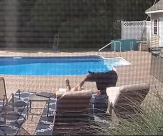 【動物】庭のプールにクマが現れ、プールサイドで寝ている男性に近づき…