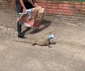 【動物】頭にプラスチックの容器がはまったオオトカゲを男性が助けてあげる衝撃映像