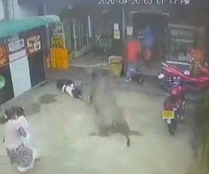 【衝撃】必死に逃げる子供に暴れ牛が後ろから襲いかかる衝撃映像