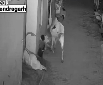 【衝撃】夜道を歩く女性に野良牛が襲いかかり 助けに入った少年にも襲いかかる衝撃映像
