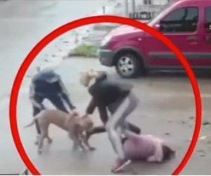 【動物】母親と歩いている7歳の少女がピットブルに襲われ大勢で必死に助けるが…