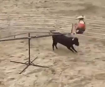 【衝撃】突進してくる暴れ牛をロデオシーソーで見事にかわす衝撃映像