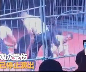 【動物】サーカスでクマが突然トレーナーに襲いかかりスタッフが必死に助けるが…