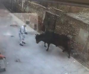 【衝撃】おじいさんが野良牛を棒で叩き追い払おうとするが強烈な反撃を食らう衝撃映像