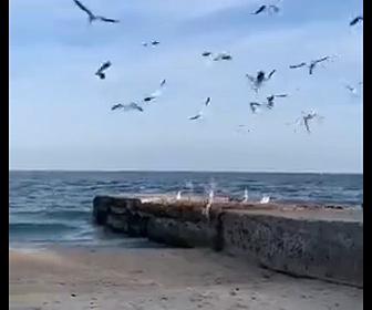 【動物】ネコが後ろからカモメに近づき飛びかかる衝撃映像