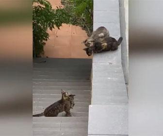 【動物】階段に取り残された子猫を母猫がジャンプして屋根の上に運ぶ衝撃映像