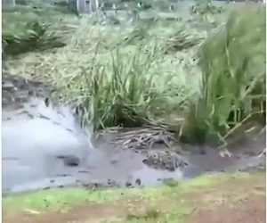 【衝撃】湖の底が陥没し、水草が凄い勢いで吸い込まれていく衝撃映像