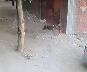 【動物】小さな男の子が野犬に襲われるがネコが助けてくれる衝撃映像