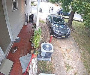 【衝撃】隣人の男がドアに前に座っているネコにピットブルを放つ衝撃映像