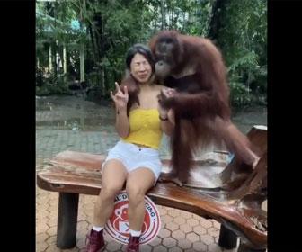 【動物】チンパンジーと写真を撮る女性がチンパンジーにやらしいことをされる衝撃映像