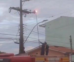 【動物】消防士が電柱に登ってしまったネコを助けようとするが…