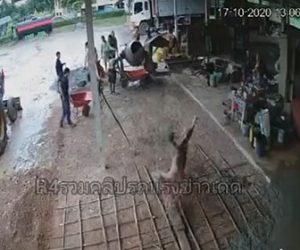【衝撃】1輪車でセメントを運ぶ男性が足を滑らせ、頭からセメントに突っ込む衝撃映像