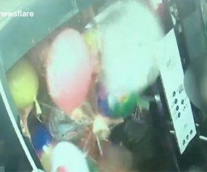 【衝撃】エレベーター内で大量の風船を持った男性がライターで風船の束を切り離そうとするが…