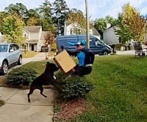 【動物】荷物を配達に来たamazon配達員にピットブルが襲いかかる衝撃映像