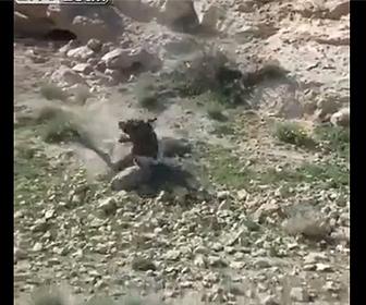 【動物】崖からロバが転落してしまうが…