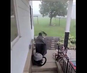 【動物】強風で飛ばされてきた鳥に子猫が飛びかかる衝撃映像