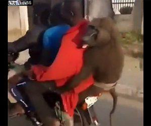 【動物】3人が乗るバイクの後ろにサルがしがみついている衝撃映像
