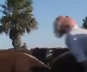 【衝撃】インタビューを受けてる獣医に後ろから牛が突っ込む衝撃映像