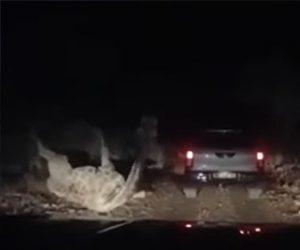 【動物】夜道を必死に走って逃げる男性にキリンが襲いかかる衝撃映像