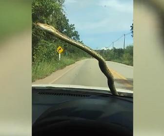 【衝撃】走る車のボンネットからヘビが出てくる衝撃映像