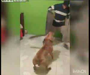 【動物】マチェーテを咥えたピットブルが男性に襲いかかる衝撃映像