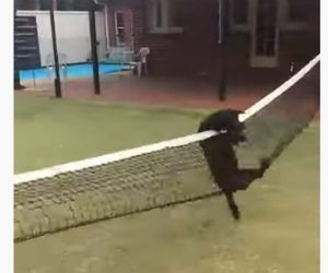【動物】猛スピードで走る犬がテニスのネットを飛び越えようとするが…