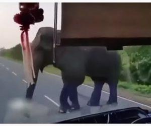 【動物】ゾウが車道を塞ぎ、車の中に鼻を入れ…