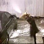 【衝撃】女性が初めての洗車。水圧が突然強くなり散水ノズルが暴れ出す衝撃映像