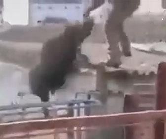 【動物】檻の上からイノシシを威嚇する男性に怒ったイノシシが…