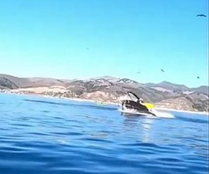 【動物】巨大なクジラが2人が乗るカヤックを丸のみする衝撃映像