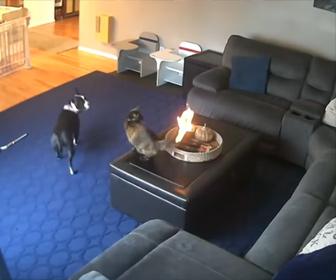 【衝撃】ロウソクの火がフサフサのネコのしっぽに燃え移ってしまう衝撃映像