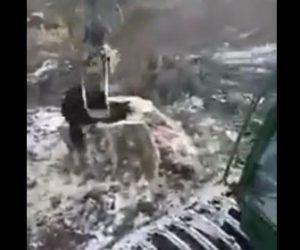【動物】重機のアーム(フォワーダー)で切り株に隠れているクマを捕まえる衝撃映像