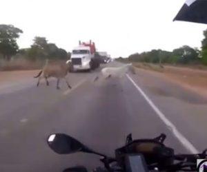 【事故】猛スピードで走るバイクの前に横から馬が飛び出てくる衝撃映像