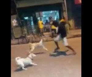 【衝撃】酔っ払った男性が襲いかかってくる3匹の犬と戦う衝撃映像