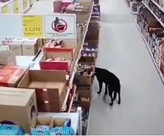 【動物】犬がスーパーマーケットに侵入し商品をくわえ逃走する衝撃映像