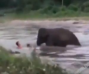 【動物】川で流されている男性に象が川岸から泳いで近づき男性を助ける衝撃映像