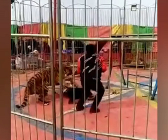 【動物】サーカスの猛獣ショーでトラがトレーナーに襲いかかる衝撃映像